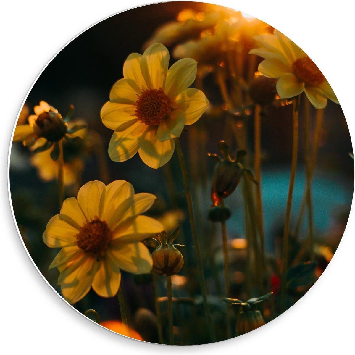 Forex Wandcirkel - Bloemetjes in het Geel - 50x50cm Foto op Wandcirkel (met ophangsysteem)