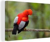 Zingende Rode rotshaan op een tak Canvas 120x80 cm - Foto print op Canvas schilderij (Wanddecoratie woonkamer / slaapkamer)