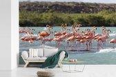 Fotobehang vinyl - Een grote groep rode flamingos staan in het water breedte 390 cm x hoogte 260 cm - Foto print op behang (in 7 formaten beschikbaar)