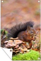 Tuinposter Eekhoorn (2) - Eekhoorn met een eikel in de herfst tuinposter los doek 40x60 cm - Tuindoek/Buitencanvas/Schilderijen voor buiten (tuin decoratie)
