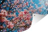 Kersenbloesem met blauwe lucht Tuinposter 120x80 cm - Tuindoek / Buitencanvas / Schilderijen voor buiten (tuin decoratie)
