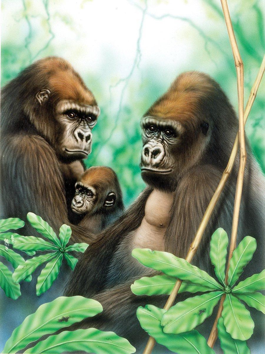 Schilderen op nummer - Paint by numbers - Dieren - Gorilla's 22x30cm - Schilderen op nummer volwassenen - Paint by numbers volwassenen