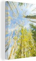 Reusachtige bomen in het Nationaal park Sierra de Guadarrama in Spanje Canvas 20x30 cm - klein - Foto print op Canvas schilderij (Wanddecoratie woonkamer / slaapkamer)