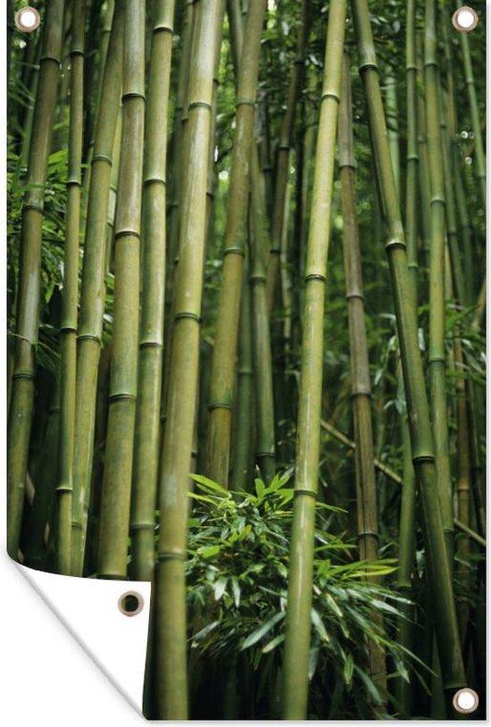 Bol Com Tuinposter Bamboe Bamboestelen 40x60 Cm Tuindoek Buitencanvas Schilderijen Voor