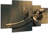 Canvas schilderij Roos   Grijs, Bruin   160x90cm 4Luik
