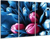 Canvas schilderij Tulp | Roze, Blauw | 120x80cm 3Luik