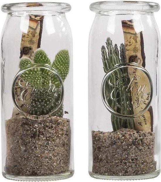 Choice of Green - Massage in a bottle Cactus Opuntia/Mammillaria - set van 2 stuks - Kamerplant in glas - Hoogte ↕30 cm
