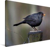 Merel zittend op een houten paaltje Canvas 140x90 cm - Foto print op Canvas schilderij (Wanddecoratie woonkamer / slaapkamer)
