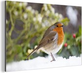 Roodborstlijster in de sneeuw voor rode besjes Aluminium 30x20 cm - klein - Foto print op Aluminium (metaal wanddecoratie)