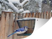 Tuinposter Etende vogels - Vogels bij vogelvoeder in de winter tuinposter los doek 40x30 cm - Tuindoek/Buitencanvas/Schilderijen voor buiten (tuin decoratie)