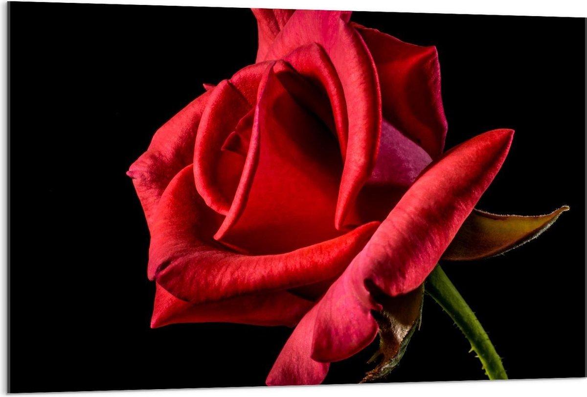 Plexiglas - Blackfoto van Rode Roos - 120x80cm Foto op Plexiglas (Met Ophangsysteem)