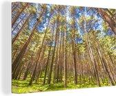 Dennenbos in het Nationaal park Sierra de Guadarrama in Spanje Canvas 30x20 cm - klein - Foto print op Canvas schilderij (Wanddecoratie woonkamer / slaapkamer)