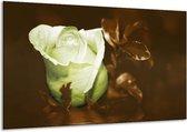 Glasschilderij Bloem | Wit, Bruin, Groen | 120x70cm 1Luik | Foto print op Glas |  F002582