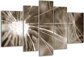 Glas schilderij Bloem | Sepia | 170x100cm 5Luik | Foto print op Glas |  F006496