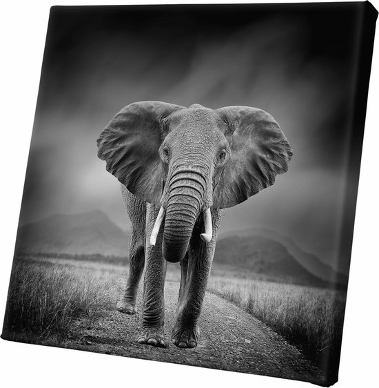Bol Com Canvasdoek Olifant Zwart Wit Wanddecoratie 60x60cm Dieren