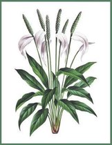 Notebook Peace Lily