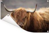 Close up van een Schotse hooglander Tuinposter 120x80 cm - Tuindoek / Buitencanvas / Schilderijen voor buiten (tuin decoratie)