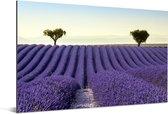 Rollende heuvels met een lavendelveld Aluminium 90x60 cm - Foto print op Aluminium (metaal wanddecoratie)