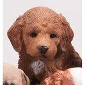 Dierenbeelden Labradoodle hond/puppy - Decoratie beeldje puppy bruin 15 cm