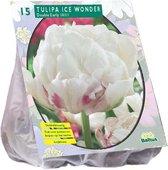 Tulipa (Tulpen) bloembollen - Ice Wonder - 2 x 15 stuks
