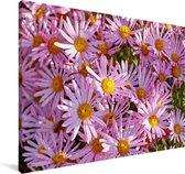 Aster bloemen in een tuin Canvas 140x90 cm - Foto print op Canvas schilderij (Wanddecoratie woonkamer / slaapkamer)