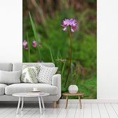 Fotobehang vinyl - Een alfalfa of luzerne bloem midden in de natuur breedte 255 cm x hoogte 340 cm - Foto print op behang (in 7 formaten beschikbaar)