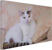 Prachtige kat Canvas 60x40 cm - Foto print op Canvas schilderij (Wanddecoratie woonkamer / slaapkamer) / Dieren Canvas Schilderijen
