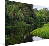 Groene natuur bij de Pantanal in in Zuid-Amerika Canvas 140x90 cm - Foto print op Canvas schilderij (Wanddecoratie woonkamer / slaapkamer)