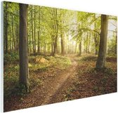 Een weg door het bos Glas 180x120 cm - Foto print op Glas (Plexiglas wanddecoratie) XXL / Groot formaat!