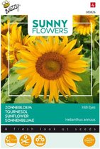 Buzzy - Zonnebloem Irish Eyes (Helianthus)