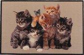 Deurmat foto kittens - 40 x 60 cm