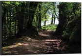 Dibond –Pad tussen de Bomen– 40x30 Foto op Aluminium (Wanddecoratie van metaal)