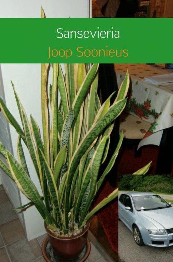 Sansevieria - Joop Soonieus   Fthsonline.com
