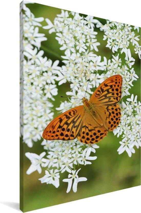 Een oranje vlinder is neergestreken op een kervel Canvas 60x90 cm - Foto print op Canvas schilderij (Wanddecoratie woonkamer / slaapkamer)
