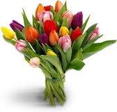 25 gemengde kleuren tulpen boeket