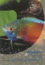 Basisgids Vissen Voor Het Gezelschapsaquarium