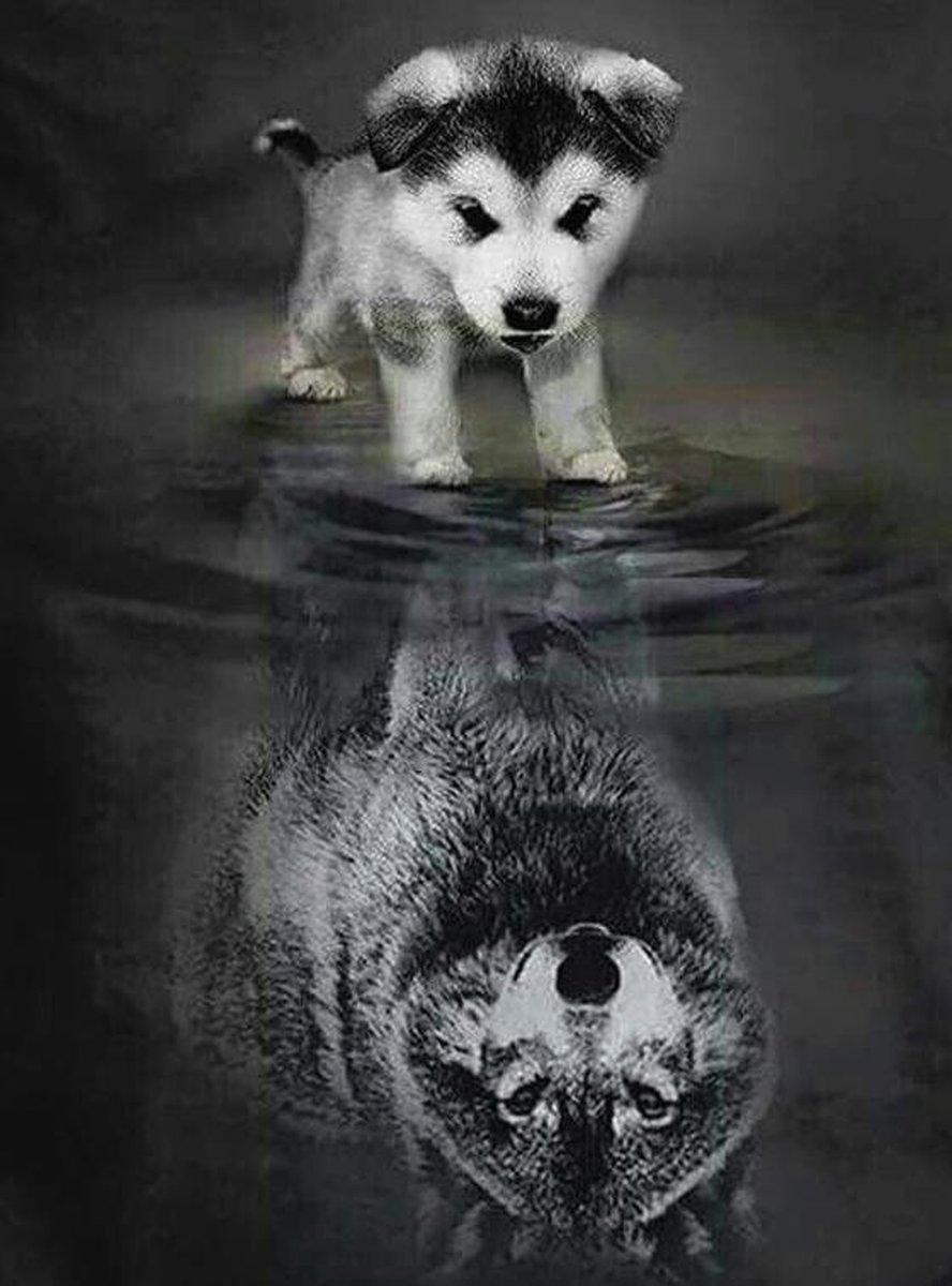 SEOS Shop ® Diamond Painting pakket Wolven Welpje naar Volwassen Wolf - FULL - Diamond Paintings - 25x30 cm