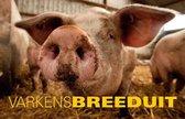 Breeduit - Varkens Breeduit