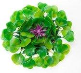 Vijverdecoratie waterhyacint
