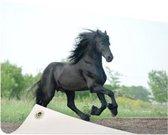 Prachtig zwart paard Tuinposter 200x100 cm - Tuindoek / Buitencanvas / Schilderijen voor buiten (tuin decoratie) XXL / Groot formaat!