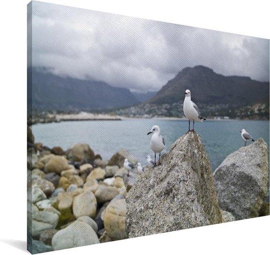 Hartlaubs meeuwen staat boven op een rots aan het water in Zuid-Afrika Canvas 140x90 cm - Foto print op Canvas schilderij (Wanddecoratie woonkamer / slaapkamer)
