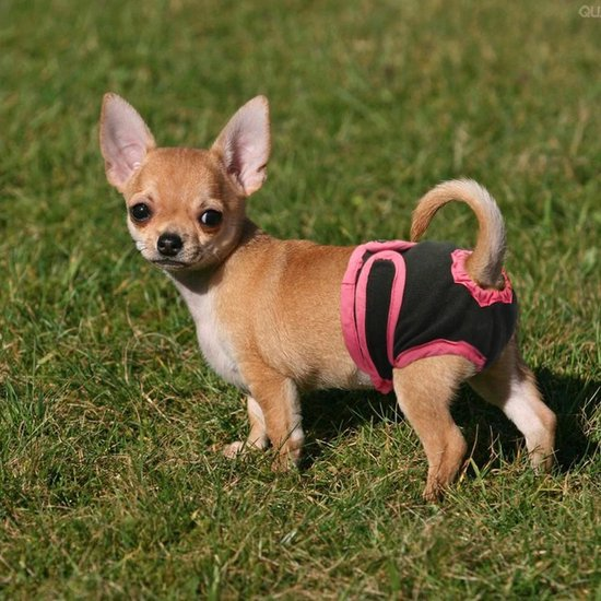 Hondenluier voor incontinentie en loopsheid - Luier voor Teef - maat S - zwart/roze