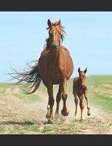 Beautiful Horses Notebook