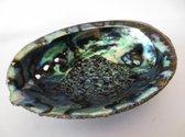 Abalone schelp om te smudgen, meditatie, yoga, huisreiniging