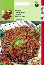 Krulsla Lollo Rossa - Lactuca sativa - set van 7 stuks