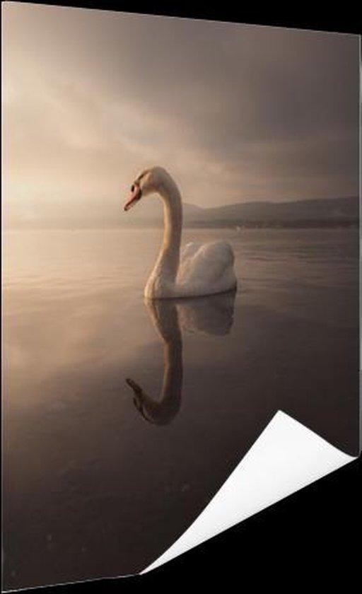 Zwaan zonsondergang Poster 40x60 cm - Foto print op Poster (wanddecoratie)