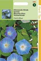 Hortitops Zaden - Ipomoea tricolor (rubro c.) Clark's Blue