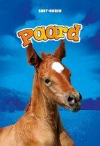Baby-dieren  -   Paard