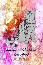 American Shorthair Cats Rock