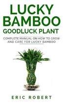 Lucky Bamboo Goodluck Plant
